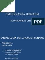 EMBRIOLOGÍA URINARIA