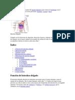 El intestino delgado es la parte del aparato digestivo que conecta el estómago con el intestino grues1.pdf