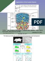 t Cells & Autoimmunity, s3