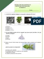 Diagnostico Ciencias 4º Básico 2015