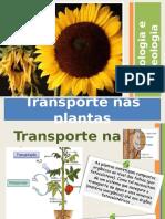 transportenasplantas-120520142520-phpapp01