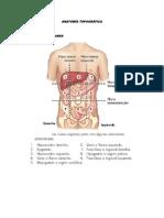 Anatomía Topográfica Abdomen