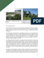 bosque higrofilo alterado.pdf