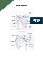 Anatomía Topográfica Cintura Escapular