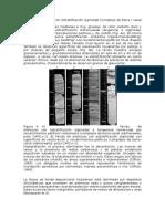 Facies de Areniscas Con Estratificación Sigmoidal