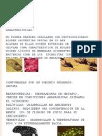 arqueobacterias-090626011711-phpapp02.pptx