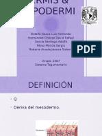 Dermis e Hipodermis Sistema Tegumentario