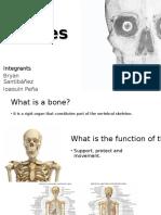 Bones english vocabulary