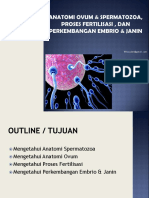 Anatomi Ovum & Spermatozoa, Proses Fertilisasi ,