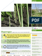 Asparagus growing instructions