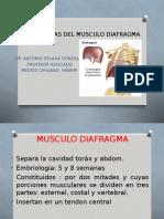 Patologias Del Musculo Diafragma