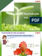Reproduoplantas-ciências 6º Ano