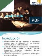 Anatomi a Superficie