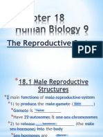 chapter 18 reproductive system fill-in 2016