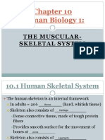 ck-12 ibook notes chapter 10 -skeletal fill-in 2016
