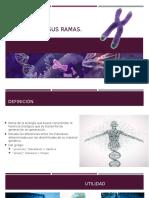 Genetica Definición y Ramas