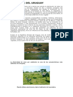 AMBIENTES DEL URUGUAY.pdf