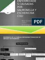 Enfermedades Causadas Por Salmonella y Eschericha Coli