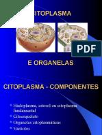 Citoplasma e Organelas
