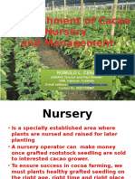 Establishment of Cacao Nursery and Management