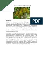 Cultivo de jaca en el ecuador.docx