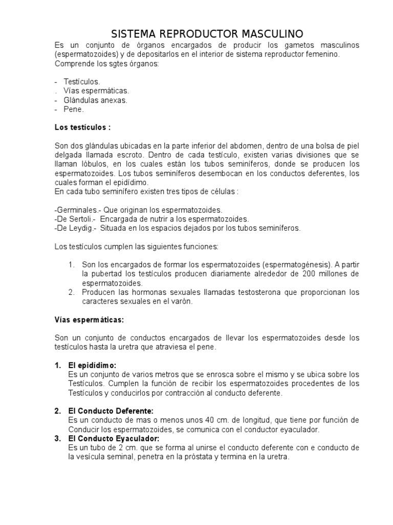 SISTEMA REPRODUCTOR MASCULINO.docx
