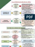 Clases de Porcinos Moyobamba