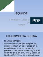 EQUINOS [Autoguardado] [Autoguardado].pptx