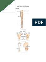 Anatomía Topográfica Femur y Cintura Pelvica