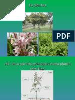 plantas_cn5