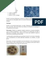 Claves taxonómicas de hongos