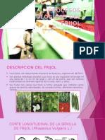 Procesos Tecnologicos Del Frijol