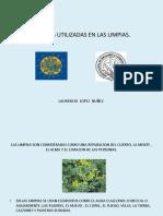 Plantas Utilizadas en Las Limpias