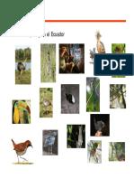 Biogeografia-AvesEcuador