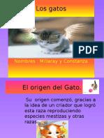 Los gatos.pptx