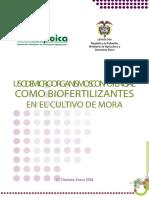 Usodemicroorganismosconpotencial BIOFERTILIZANTE en MORA