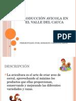 PRODUCCIÓN AVICOLA en El Valle Del Cauca