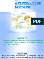 SISTEMA REPRODUCTOR MASCULINO.pptx