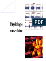PG1 FD Musclezadza