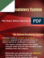 CirculatorySystem_