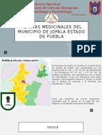 Plantas Medicinales Del Municipio de Jolapa Estado De