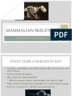 Mammalian Skeleton Practical