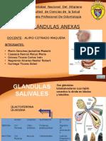 GLANDULAS FINAL.pptx