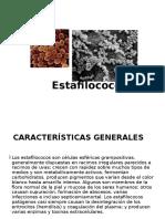 estafilococos-1