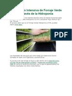 Producción Intensiva de Forraje Verde a Través de la Hidroponía.docx