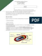 Guía celulas.