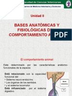 Bases Anatomicas1