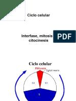Ciclo Celular (Interfase y Mitosis)