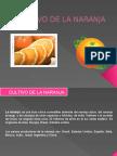 Cultivo de La Naranja