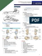(10 F) FOOT - Bones, Ligaments, Tendos